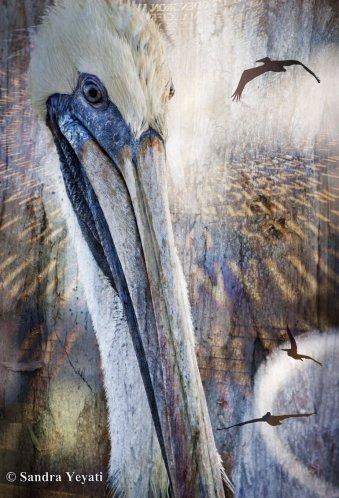 pelican-web - Copy (2)